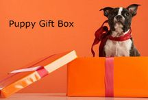 Dog Gift Boxes / Gift Boxes for Dogs - Puppies, Stinkers, Chewers, Snugglers, Fetcher and more...
