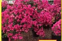 In Stock Now from Smith's Gardentown / Come shop at Smith's Gardentown, 4940 Seymour Hwy., Wichita Falls. (940) 692-7100.