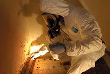 Illinois Mold Removal / by Caroline
