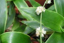 liečivé rastlinky