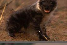 Animales bebés / Si lo que buscan es ternura sin duda lo encontraran aquí