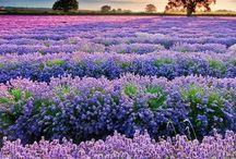 Purple, the colour I love