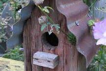 Fuglekasser