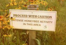 Hunaja Honey