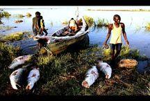 Удивительная рыбалка в Африке.Необычная рыбалка.