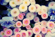 Flower child  / by Abby Kendziora