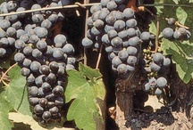 Mine fine viner