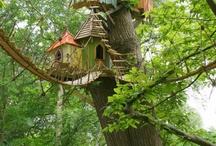 Casas en árboles / Podría vivir en una de estas...