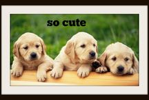 søde dyr