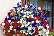 Summer Bedding Stunners / A collection of the most fabulous summer bedding plants all available at YouGarden.com...