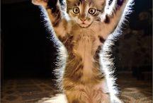 Kitties! / by Robotika Six