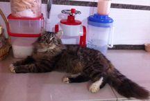 Cats / Kucing-kucing kesayangan caca