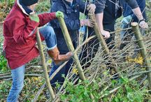 Traditional Hedge Laying course for beginners / A course for complete beginners to traditional hedge-laying and those seeking to add to woodland management or landscape gardening skills, and a great present for garden lovers and rural skill enthusiasts. Learn about local methods and traditions of hedge-laying, traditional hand tools, natural history of hedgerows whilst receiving hands on experience of laying an actual hedge within the beautiful countryside of the Brecon Beacons.