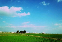 landscape / by Yukie Takedomi