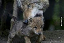 Farkas-Wolf