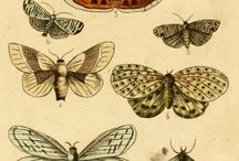 Antique Illustrations
