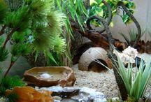 hermit crabs / by Julie