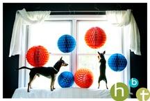 heather bohm tallman photography dogs / Dog photography by www.hbtphoto.com