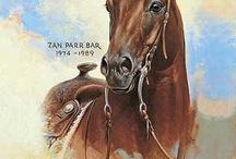 Horses - Appaloosa