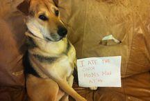 Dog Shaming / by Ellen Walker