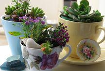 Tea Cup Gardens