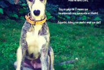 Adopted/Adoptados / #Adopted #pets with their #story