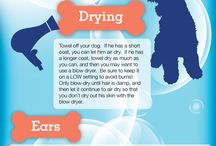 Dog grooming tips