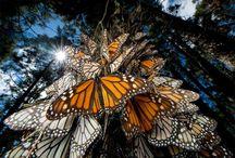 Insects and butterflies / Insects and butterflies