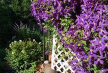 Balkon / Pflanzen / Sichtschutz