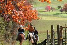 Horses and farm life