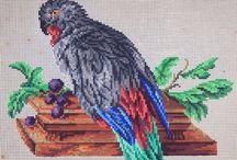 Parrots & other birds