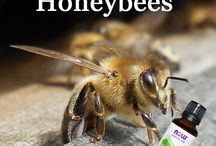 Včelárstvo