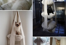 Ideas for Cats / Love my cats to pieces and they have their own bedroom. If I was rich they would probably have all these things ha ha