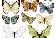 Motyle, owady i ptaki