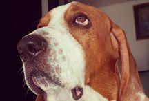 Pequeños Traviesos / Mis perros
