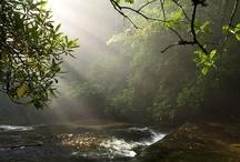 Beautiful nature/Beautiful Sights  / by Catching Dreams