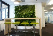 Green walls / Interior green walls as new green architecture