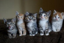 cats. / by rebecca .