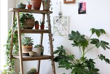 Display inspiration - plant