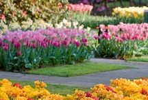 Landscaping Ideas / by Brandy Harp