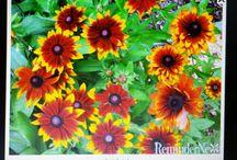 Plants & Flowers / by Dee Brumit