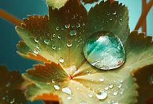 rain○°•.。*