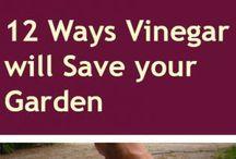 12 ways: vinegar