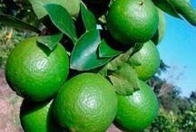 Plantas frutíferas/ornamentais