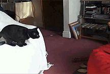 Cat / gifs