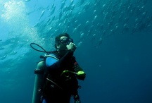 Diving Tours / by Red Mangrove