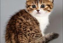 Cat*-*Cat*-*Cat