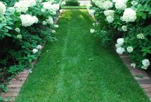 White Gardens / Romantic, delicate, white, ethereal