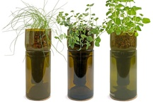 Vases & Herb Planters / Vases & Herb Planters made from glass bottles.
