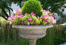 ❥ Container Gardens